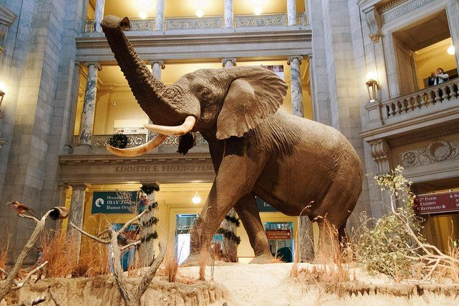 Smithsonian Museum of Natural History Opens in new window